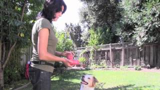 Dog Behaviorist Gives Advice On Food Aggression