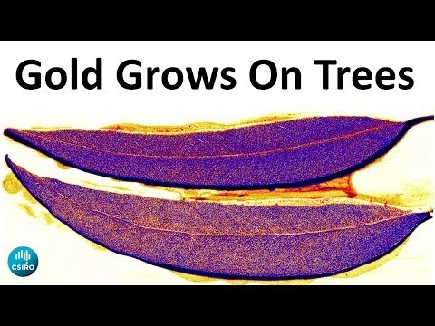 Gold grows on trees