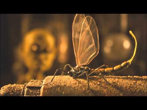 ODD - A Man [Video by Jose Enrique Rivera]