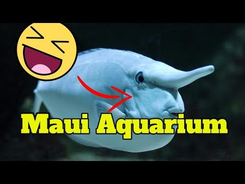 Maui Ocean Center Aquarium - Maui Hawaii Aquarium (GoPro HD)
