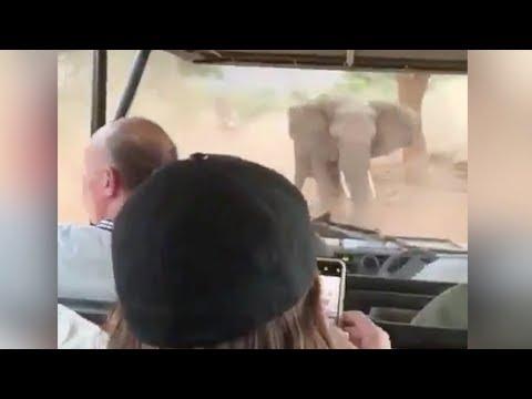 L'elefante va all'attacco: il safari è da paura