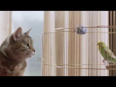 Thumbnail: Freeview TV Ad - Cat & Budgie #catandbudgie