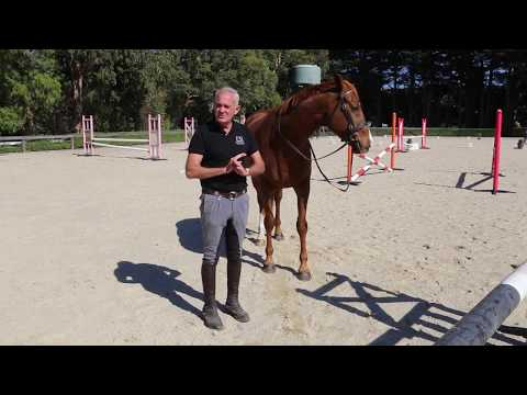 The benefits of training a horse to 'Park' with Andrew McLean
