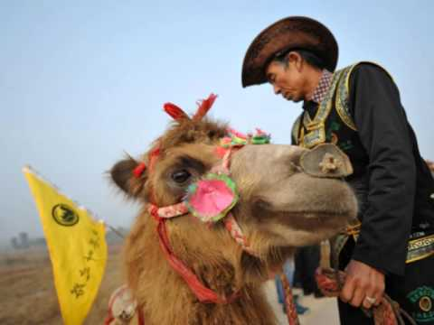 100 camels retrace old China-Russia trade route