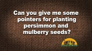 Q&A -- Planting persimmon and mulberry seeds