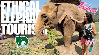LOOKING FOR AN ETHICAL ELEPHANT EXPERIENCE? Chiang Mai