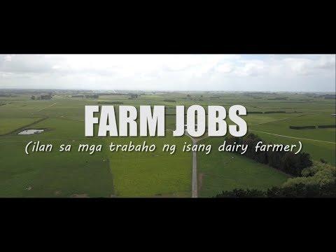 PINOY DAIRY FARMER IN NEW ZEALAND   FARM JOBS
