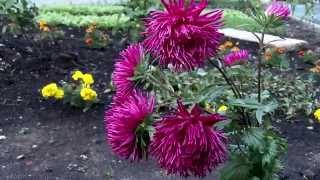 Скачать не рвите цветы mp3 в качестве 320 кбит.