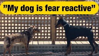 Watch a reactive dog make friends