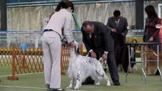 2010.01.30川越クラブ展、KING戦①.