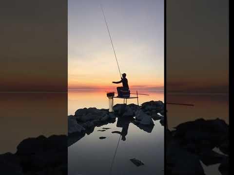[samsung Theme- Video Wallpaper] Fishing
