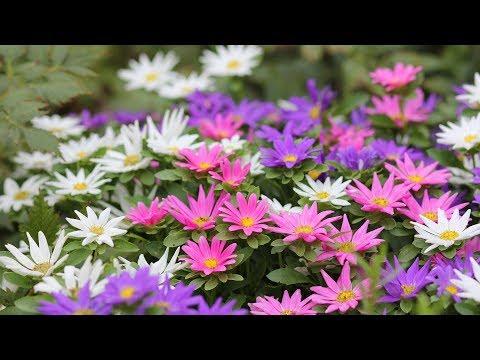 Весь сад в цветах! Из собственных семян
