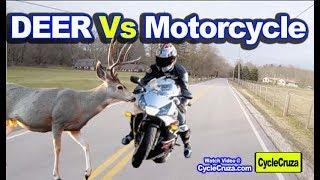 Motorcycle Vs DEER - How to AVOID Motorcycle Crash with Deer