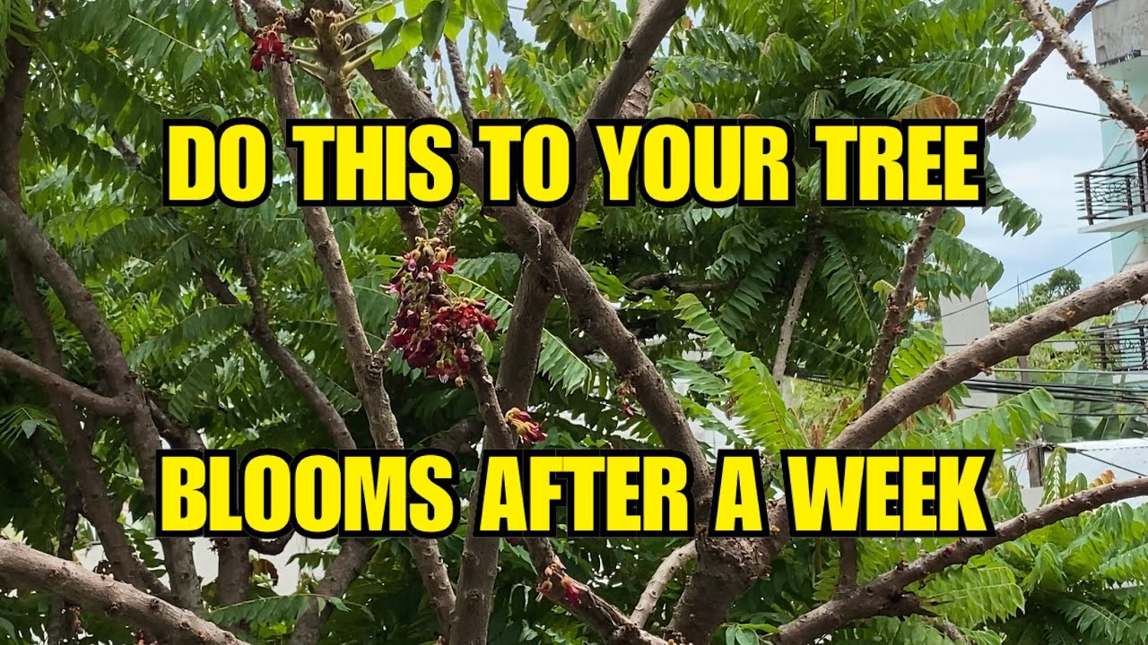 How to Force your Tree to Bear Fruits