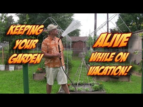 Keep Your Garden ALIVE While on Vacation - Tips
