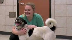 Adopt Don't Shop   Richardson Animal Shelter