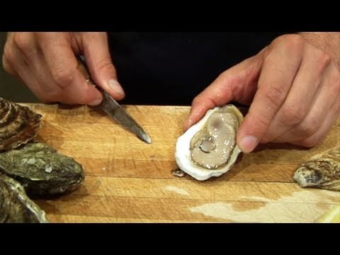 Oysters 101: Learn the Basics