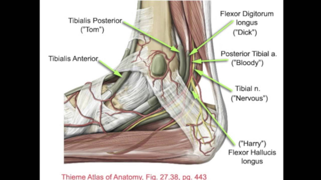 Sheldon Posterior Tibial Nerve Block Youtube