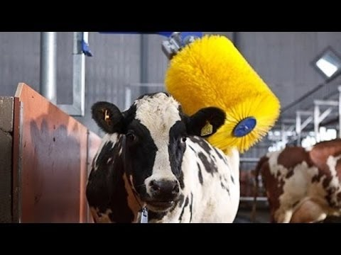 See how Europe is producing milk !!! Robotic farm