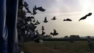 The last of Wales' pigeon fanciers