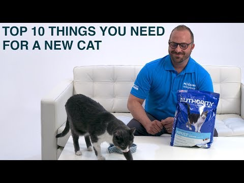 Things You Need For A New Cat Or Kitten   PetSmart