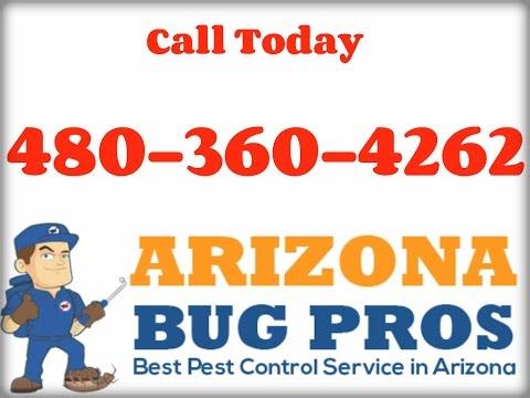 Termite Inspection Buckeye, AZ (480) 360-4262
