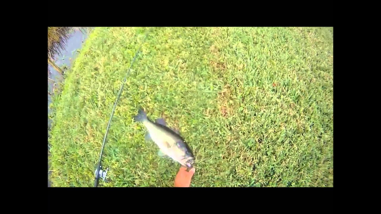 Largemouth bass fishing topwater frog fishing with a for Topwater bass fishing