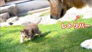 大きなお友達にも動じない保護猫