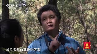 [远方的家]行走青山绿水间 哀牢山的鸟类精灵| CCTV中文国际