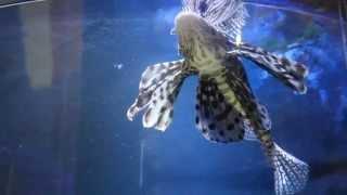 Deep Sea World видео 2
