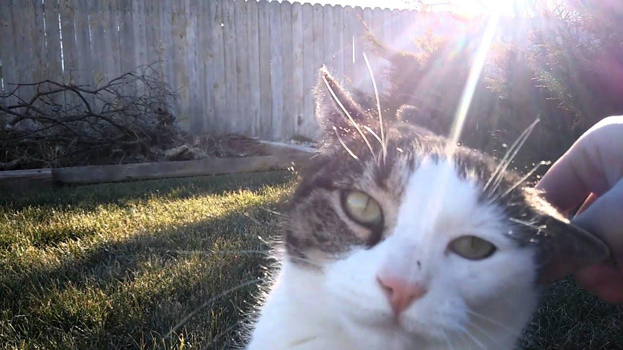 Friendly Stray Cat in Backyard - YouTube