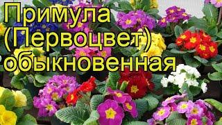 видео Примула обыкновенная, первоцвет Primula vulgaris