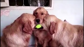 Funny dogs #22