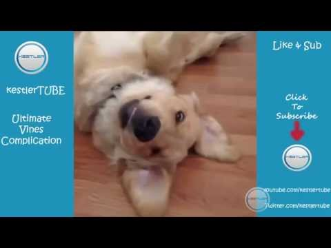 Pet and Animals Vine Complication, Dogs and Cats 2014