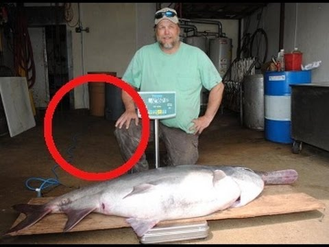 Record prehistoric paddlefish caught in south dakota youtube for Spoonbill fish oklahoma
