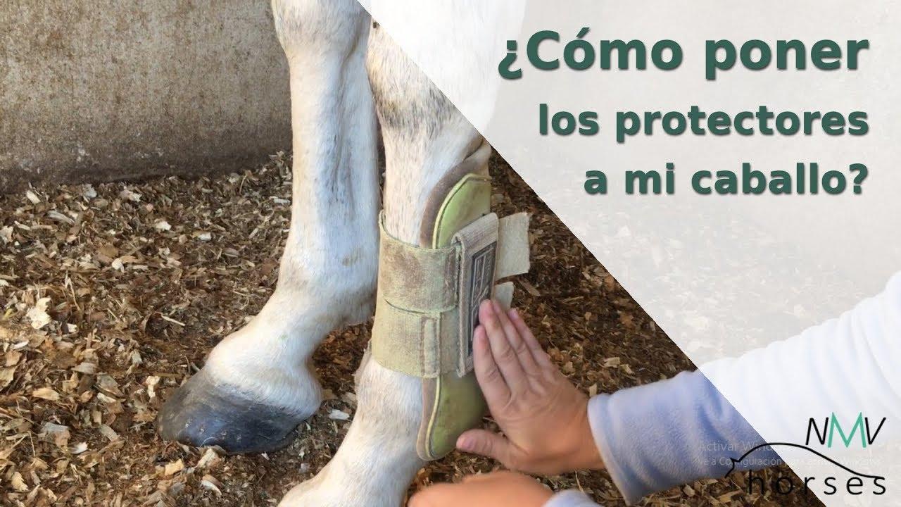 bc9c81b8208 Mejor Protectores Para Caballos – Revista Visor