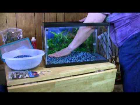 How to set up a dual 10 gallon betta fishtank youtube for Fish for a 10 gallon tank