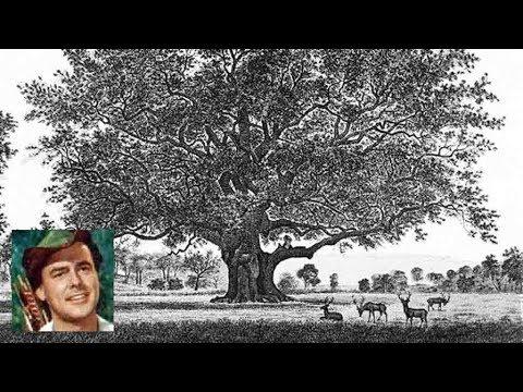 Major Oak (Robin Hood's Tree)
