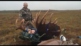 Ascender Game Carrier hauling moose.