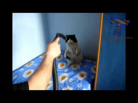 [relax-with-cat]-cat-meowing-funny-copters-(p15)