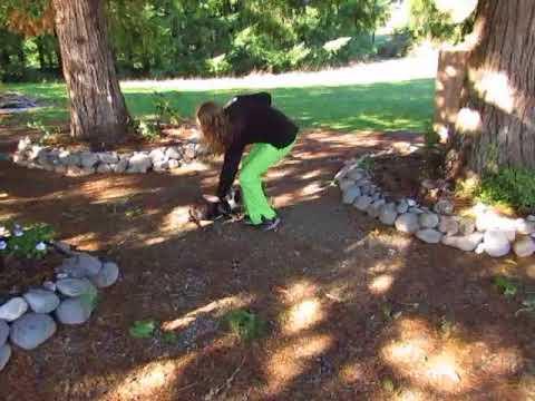 Bella ~ French Bulldog Puppies ~ Oregon French Bulldog Breeders