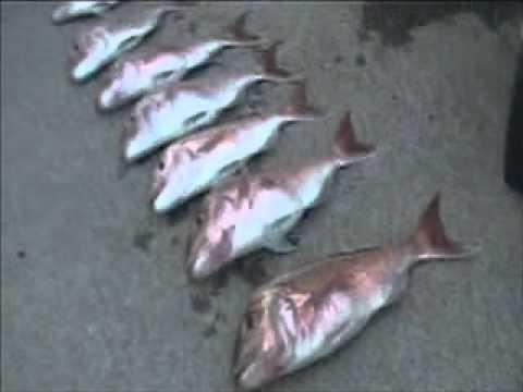 Snapa Slapa - Doubtless Bay Fishing - Northland - New Zealand