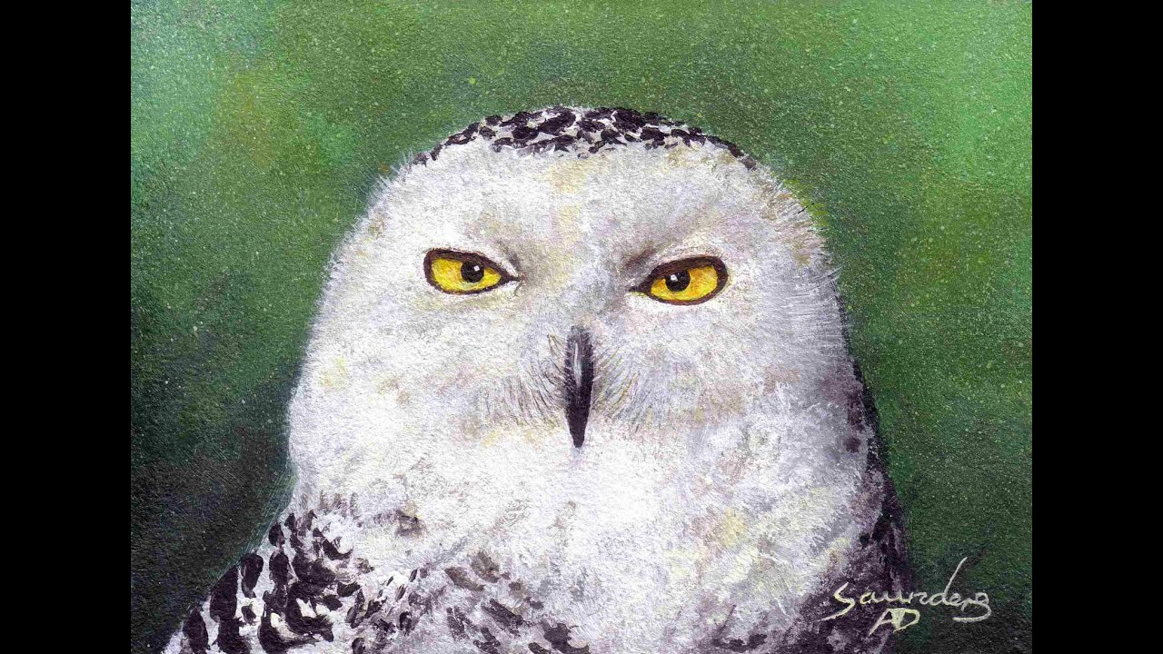 Snowy Owl: Speed Painting - YouTube