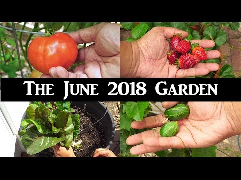June Garden Tour - Harvests, Things To Do, Gardening Tips & A Lot More!