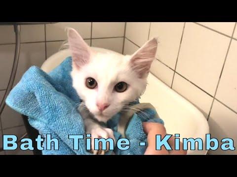 Maine Coon Kitten Kimba Gets a Bath