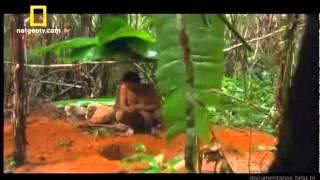 A vida selvagem na floresta Amazonica    10 min