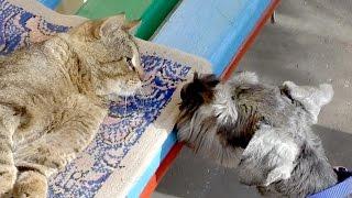 Ты кто, морда? Funny cat. Смешные коты.