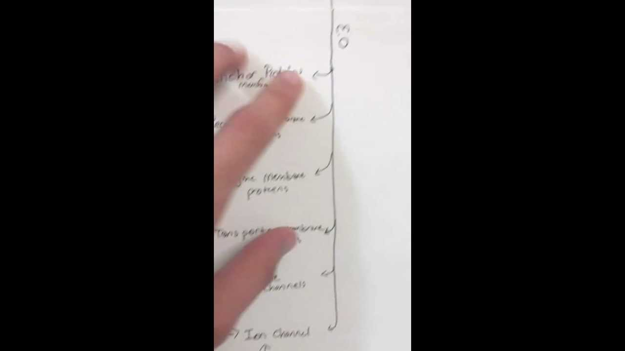Cell Membrane Concept Map Youtube
