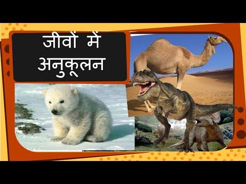 Science - Animal Adaptation -- Extinct and Endangered animals - Hindi