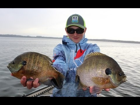 How To Catch GIANT Bluegills In Public Lakes